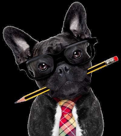 wonky-dog